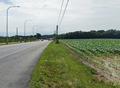 MITCHELL DRAPER FARM VIEW LOOKING WEST