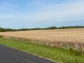 PINEY CEDAR FARM LOOKING WEST ALONG ROAD FRONTAGE