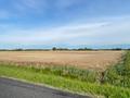PINEY CEDAR FARM LOOKING NORTH TOWARDS IMPROVEMENTS