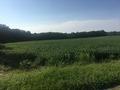 FULTON FARM NORTH VIEW THROUGH EASTERN PORTION OF PROPERTY