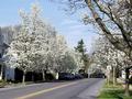 Pine Grove Road, Pine Grove Mills