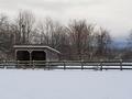 Tudek Park horse pasture