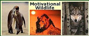 Motivational Wildlife Animal Posters Image