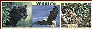 Wildlife Animals Art Prints & Posters Image