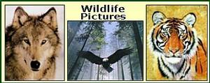 Wildlife Art Print Pictures & Lithographs Image