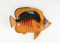 Brown Surgeon Fish