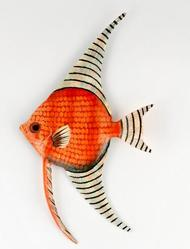 Long Fin Angel Fish