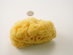 Large Sponges