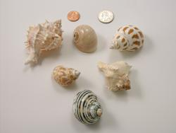 Average Shells