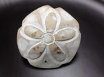 Sand Dollar Napkin Rings
