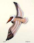 Fyling Pelican