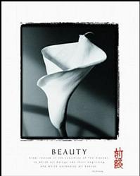 Beauty Calla Lily Poster 22x28