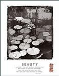 Beauty Lilly Pads Poster 22x28