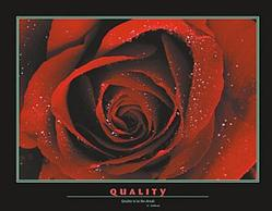 Rose Quality Poster 28x22