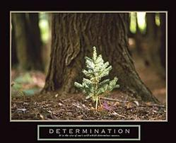 Determination Little Pine Poster 28x22