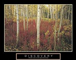 Discovery Aspen Trees Poster 28x22