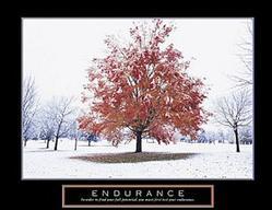 Endurance Fall Tree Poster 28x22