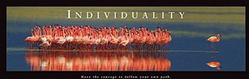 Flamingos Individuality Poster 36x12