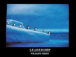 Penguins Leadership Poster 20x16