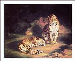 Pair of Leopards Art Print