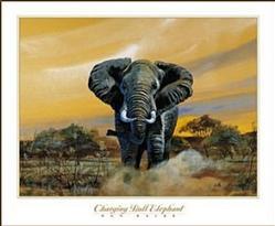 Charging Bull Elephant Poster