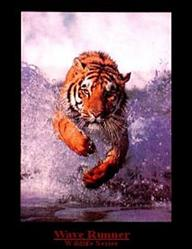 Wave Runner Tiger Poster