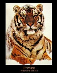Power Tiger Poster