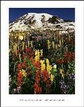 Mt. Rainer Poster