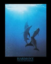 Dolphins Harmony Poster 8x10