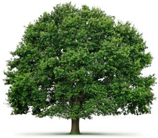 Tree Program Tree
