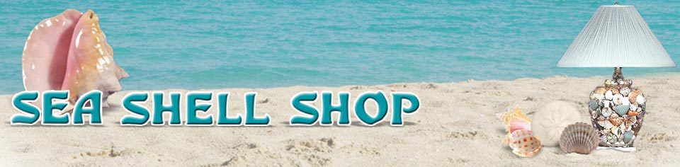 Sea Shell Shop E-commerce Store Powered by Store-Logic